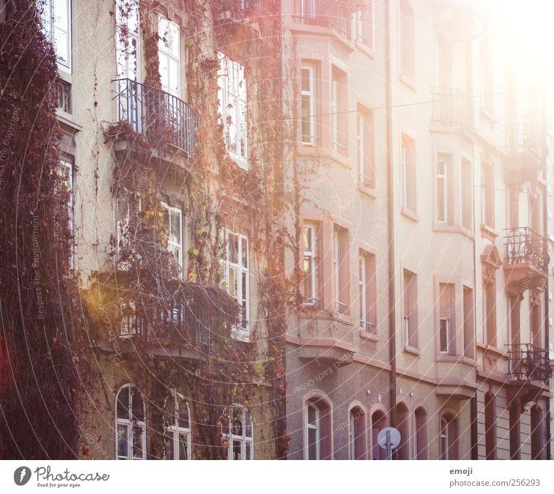 rosarot Haus Einfamilienhaus Mauer Wand Fassade Fenster Stadt Herbst Farbfoto Außenaufnahme Menschenleer Tag Licht Lichterscheinung Sonnenlicht Sonnenstrahlen