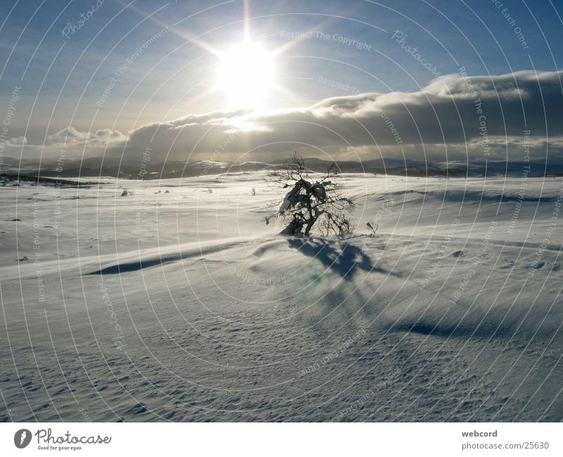 Baumgrenze Winter Skitour Gegenlicht Hardangervidda Norwegen Süd-Norwegen Berge u. Gebirge Schnee Wintertouren Winterzelten