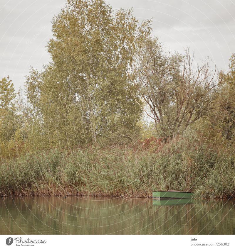 spätsommer Umwelt Natur Pflanze Himmel Sommer Herbst Baum Gras Sträucher See natürlich blau gelb grün Steg Farbfoto Außenaufnahme Menschenleer Tag