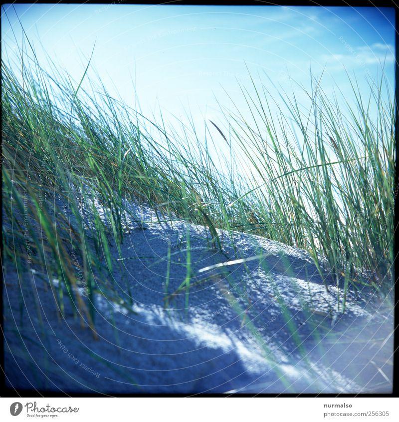 in den Dünen Natur Pflanze Sonne Ferien & Urlaub & Reisen Meer Sommer Strand Sand Küste Stimmung Freizeit & Hobby Wind Ausflug Pause dünn