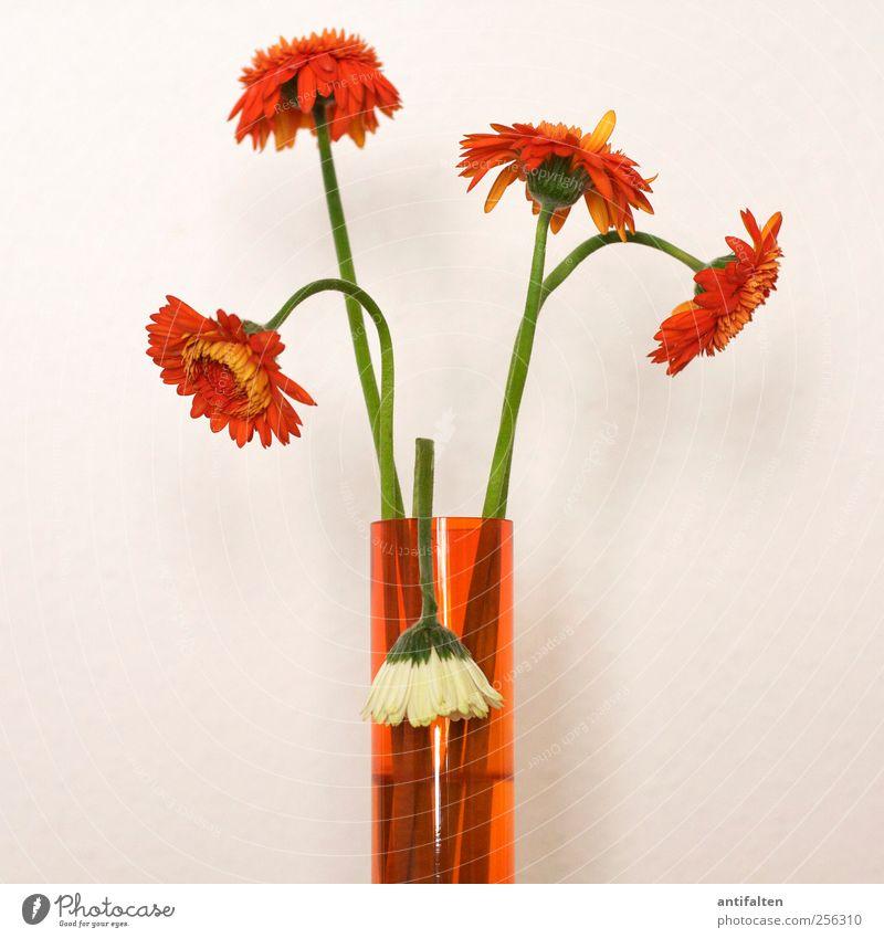 Vergänglichkeit grün weiß schön Pflanze Blume Sommer Blatt Herbst Blüte orange Glas ästhetisch Dekoration & Verzierung Stengel Blumenstrauß