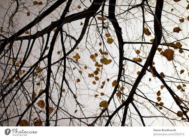 gib mir eine letzte Chance Umwelt Natur Pflanze Luft Himmel Herbst Winter Klima Wetter Dürre Baum Blatt Wildpflanze Garten Park einfach kalt natürlich trocken