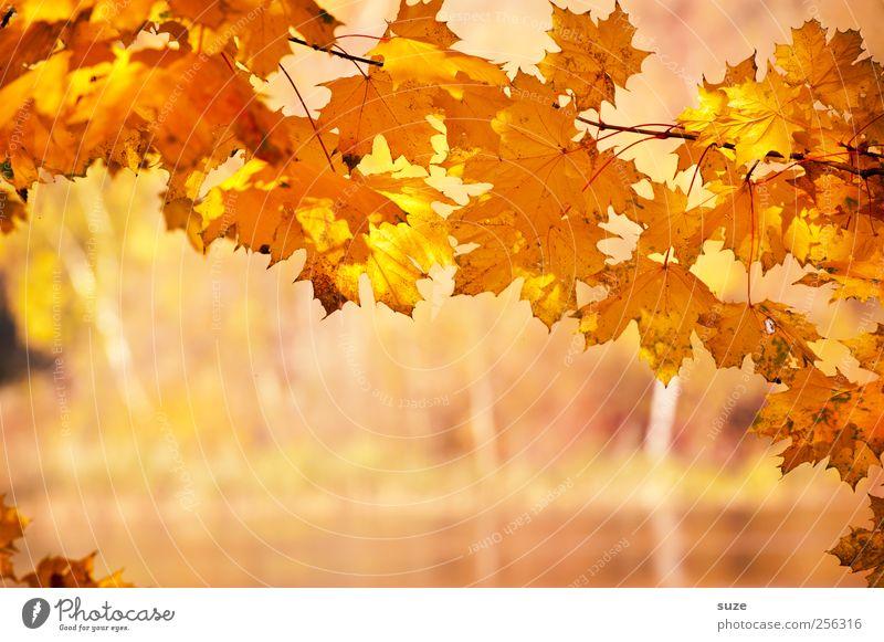 Goldener Moment Natur schön Pflanze gelb Herbst Umwelt Landschaft Wärme See Wetter orange gold natürlich Klima authentisch leuchten