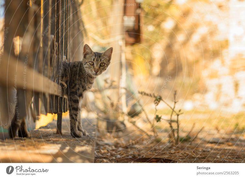 Durch den Zaun Tier Haustier Katze Tiergesicht Fell Krallen Pfote Fährte 1 beobachten Bewegung Spielen streichen Katzenauge Farbfoto Gedeckte Farben mehrfarbig