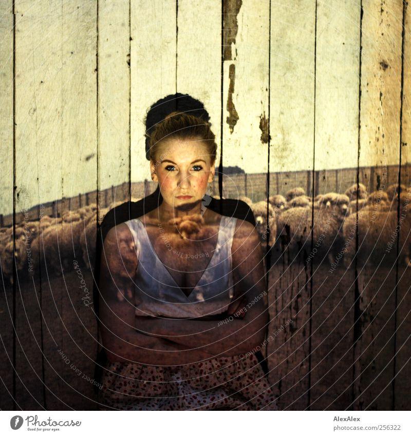 Aufpassen auf die schwerelosen Schafe Bioprodukte Dachboden Weide Landwirtschaft Forstwirtschaft feminin Junge Frau Jugendliche Gesicht 1 Mensch 18-30 Jahre