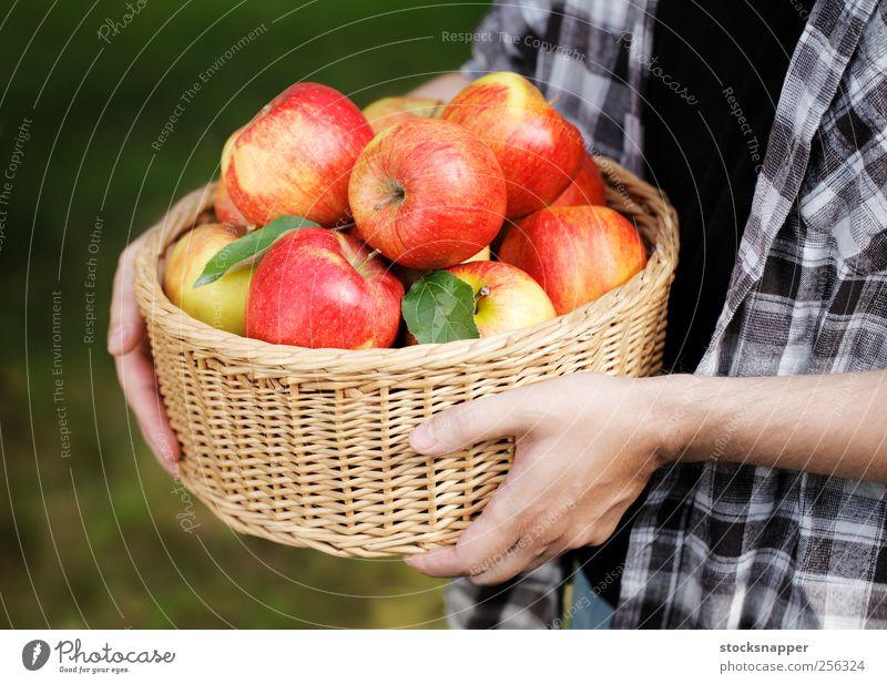 Apfelernte Garten Gartenarbeit Außenaufnahme Herbst Weidenkorb Lebensmittel Halt Hand Ernte Frucht reif rot satt Korb