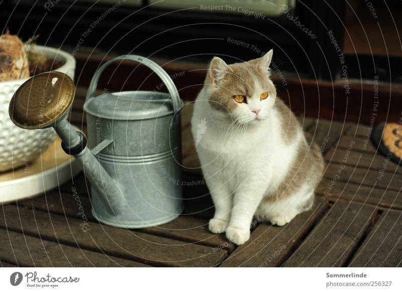 Mich kümmert nichts weiß Sommer ruhig Tier Katze orange Wohnung warten Häusliches Leben Neugier rein Gelassenheit Terrasse Haustier Interesse Fernweh