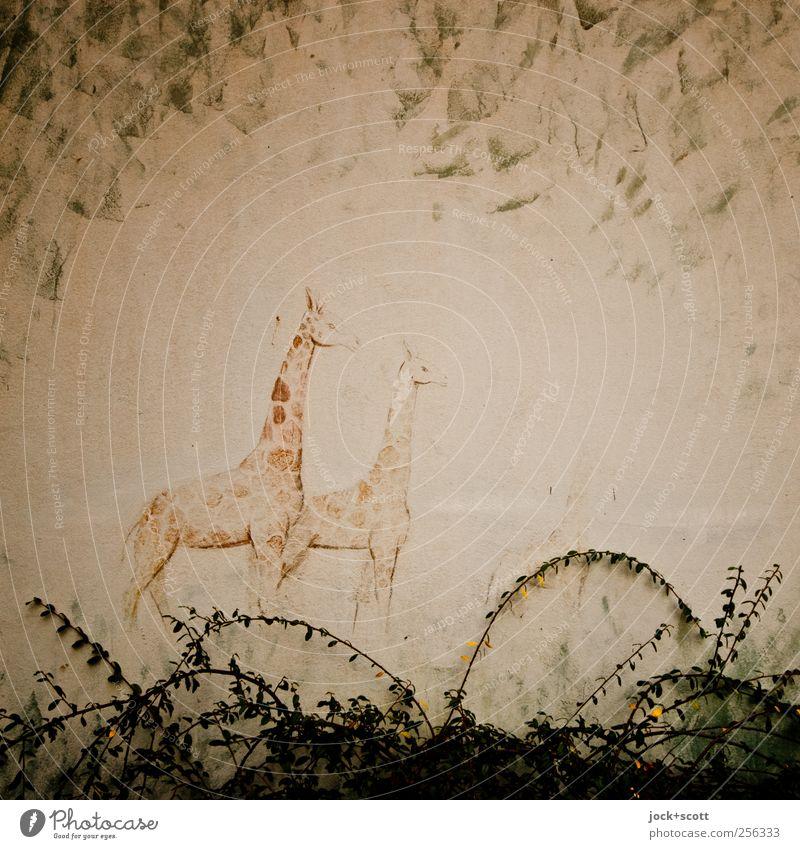 afrikanischer Traum Ferien & Urlaub & Reisen Safari Expedition Kunst Kunstwerk Tier Pflanze Afrika Mauer Wand Giraffe Tiergruppe Beton stehen träumen alt