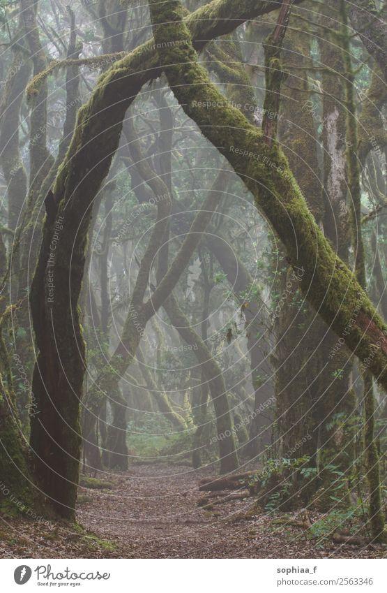 Zauberwald Natur Pflanze schlechtes Wetter Nebel Baum Moos Wald Urwald Kraft achtsam ruhig Hoffnung träumen Traurigkeit Sorge Trauer Tod Sehnsucht Einsamkeit