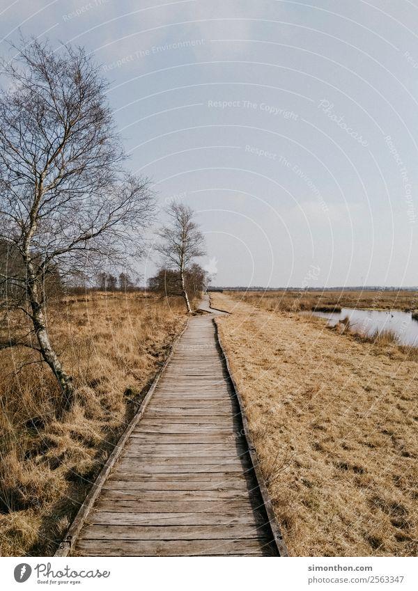 Holzweg Umwelt Natur Landschaft Pflanze Klima Klimawandel Wetter Topfpflanze Seeufer Flussufer Moor Sumpf Teich Bach natürlich Sicherheit stagnierend