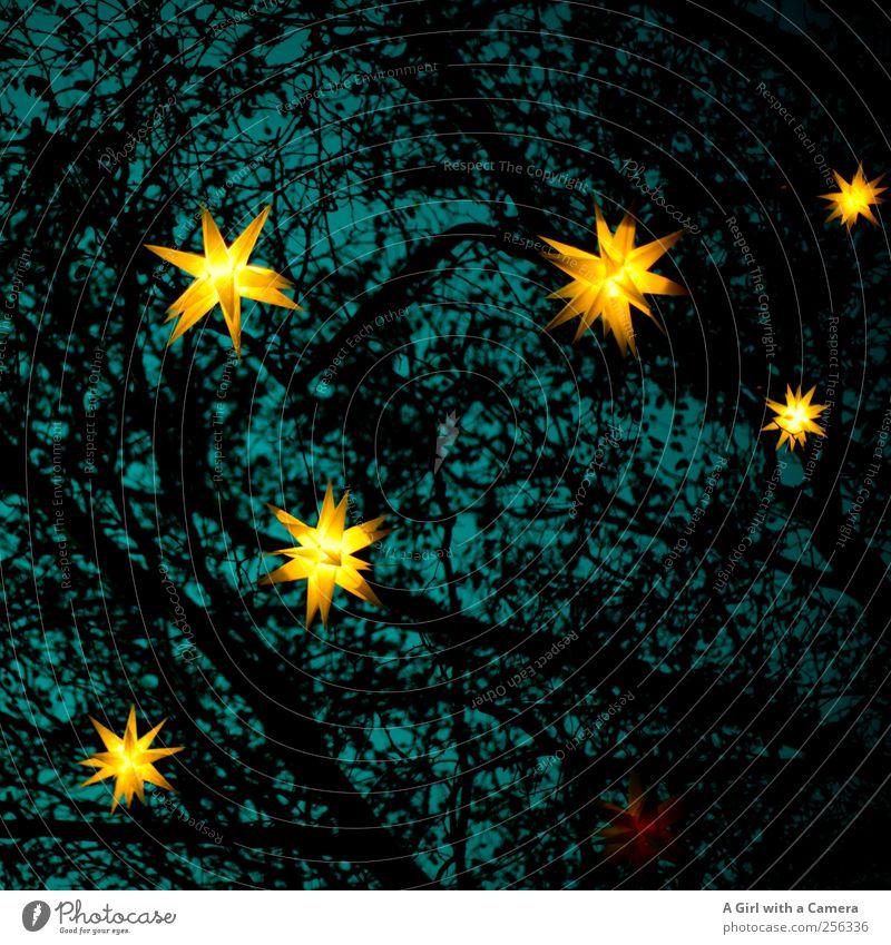 kleine Wagen? Weihnachten & Advent gelb oben Garten gold glänzend hoch Design Fröhlichkeit Lifestyle Stern (Symbol) leuchten Dekoration & Verzierung