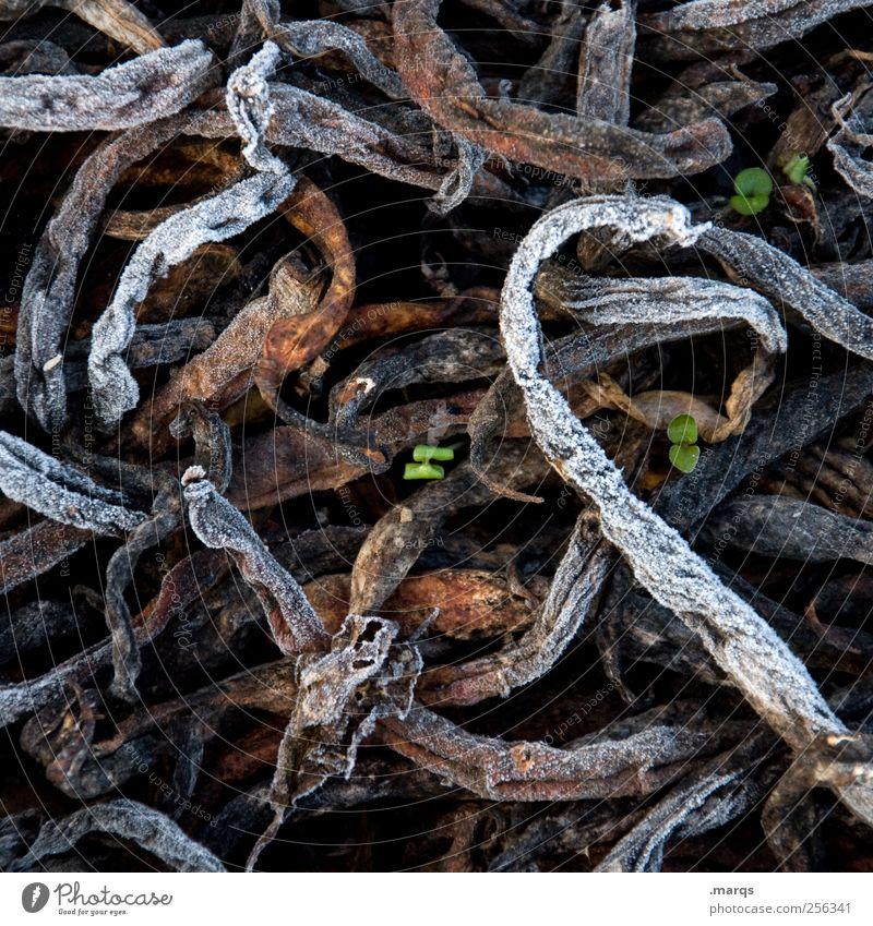 Life goes on Umwelt Natur Winter Pflanze Kompost Wachstum kalt Erfolg Kraft Leben Verfall Vergangenheit gefroren Durchsetzungsvermögen Farbfoto Außenaufnahme