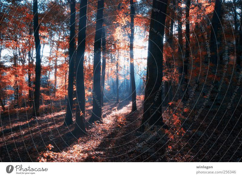 schein Natur Landschaft Pflanze Sonne Sonnenaufgang Sonnenuntergang Sonnenlicht Herbst Baum Blatt Wald Park rot schwarz weiß Herbstwald Herbstlaub herbstlich