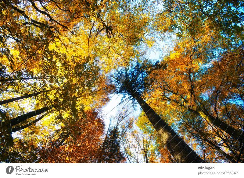 baumkronen Himmel Natur grün weiß Baum Erholung rot Blatt Freude Wald schwarz gelb Herbst braun Stimmung träumen