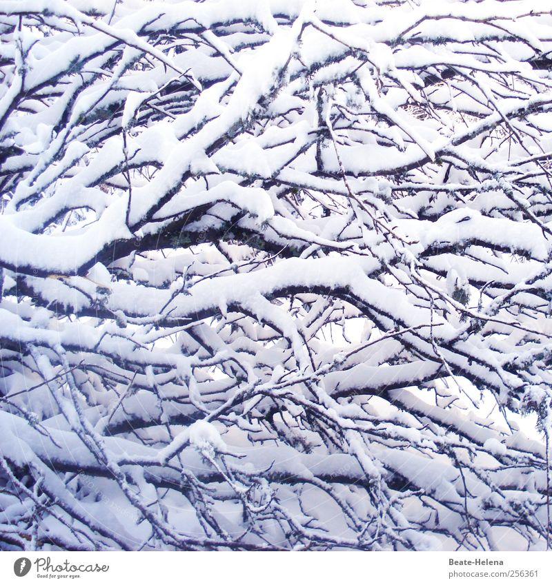 Schneegeästel Natur weiß Baum Pflanze Winter schwarz Wald kalt Schneefall Eis glänzend warten frisch ästhetisch außergewöhnlich