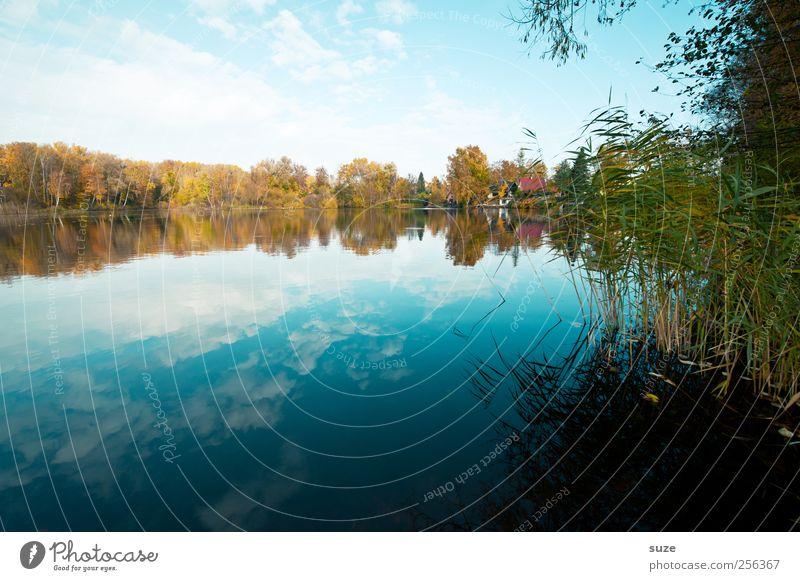 Draußen am See Himmel Natur Wasser blau Pflanze Sommer Wolken Herbst Umwelt Landschaft Wetter Klima Wachstum Urelemente Idylle