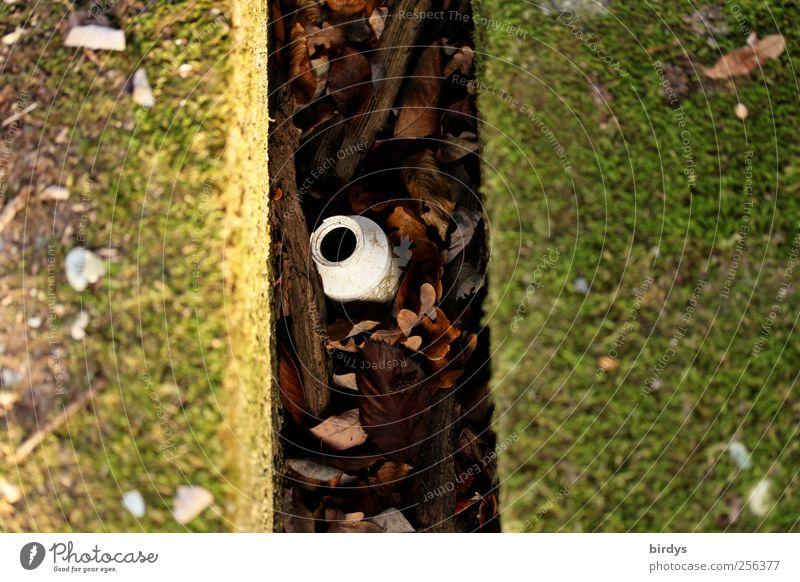 Spaltendasein Pflanze Herbst außergewöhnlich Ecke Wandel & Veränderung Teilung Flasche parallel Herbstlaub Moos Tiefenschärfe Symmetrie Spalte Umweltverschmutzung bewachsen Graben