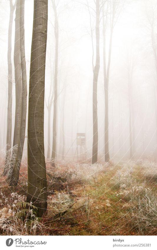 Hochsitzpirsch Natur Baum ruhig Wald Umwelt Herbst hell natürlich Eis außergewöhnlich Nebel hoch Wandel & Veränderung Frost Romantik Frieden