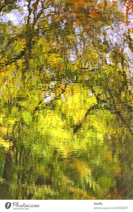 Herbstimpression Natur Landschaft Pflanze Wasser Baum Zweige u. Äste Teich Herbstlandschaft schön gelb grün Herbstgefühle Reflexion & Spiegelung Unschärfe