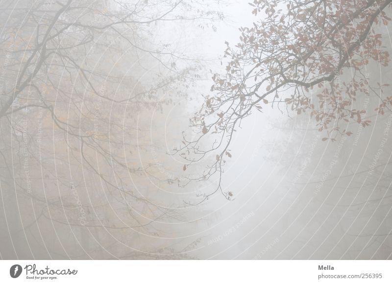 Quo vadis? Umwelt Natur Pflanze Herbst Winter Nebel Baum Blatt Ast Wald hängen verblüht dehydrieren Wachstum gruselig natürlich trist grau ruhig Vergänglichkeit