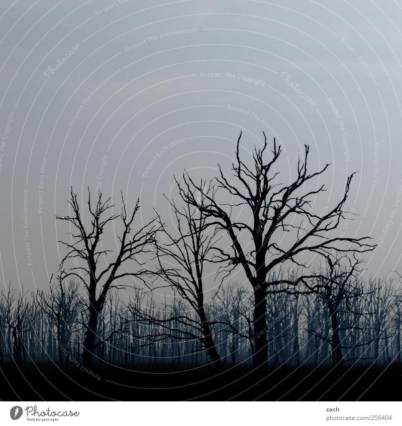 Herbst Himmel Natur blau Baum Pflanze Winter schwarz Wald dunkel Umwelt Holz Traurigkeit Regen Wetter Angst