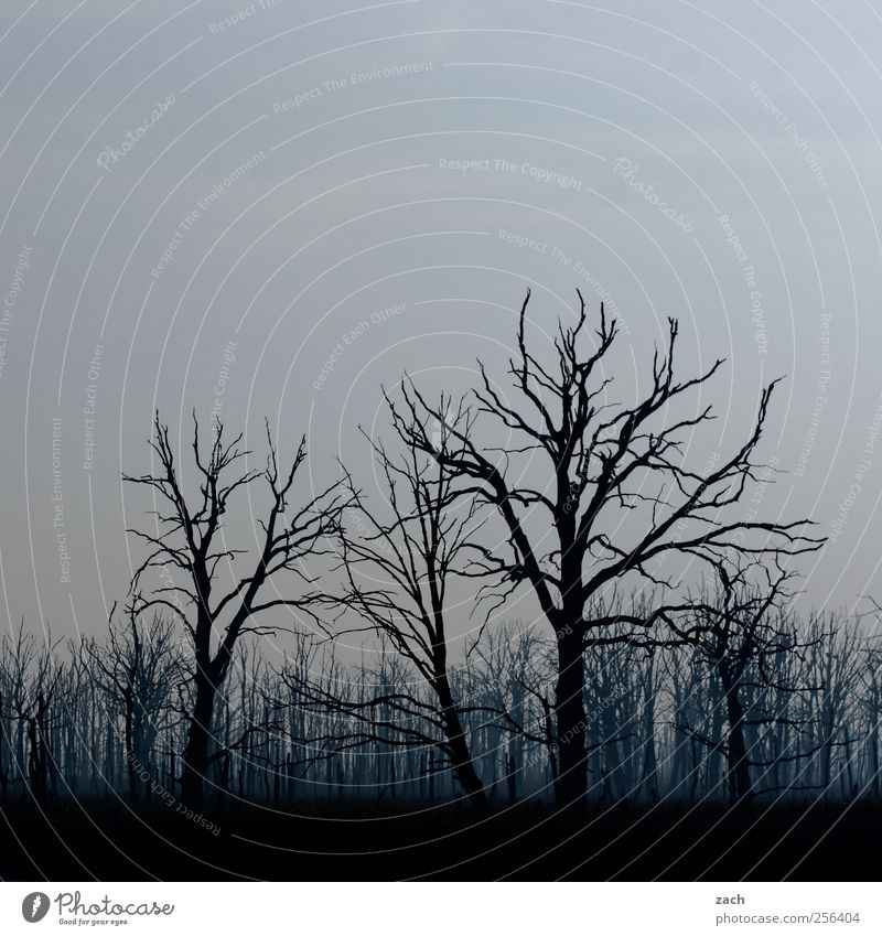 Herbst Umwelt Natur Himmel Winter Wetter schlechtes Wetter Nebel Regen Dürre Pflanze Baum Wald Holz verblüht dehydrieren bedrohlich dunkel gruselig blau schwarz