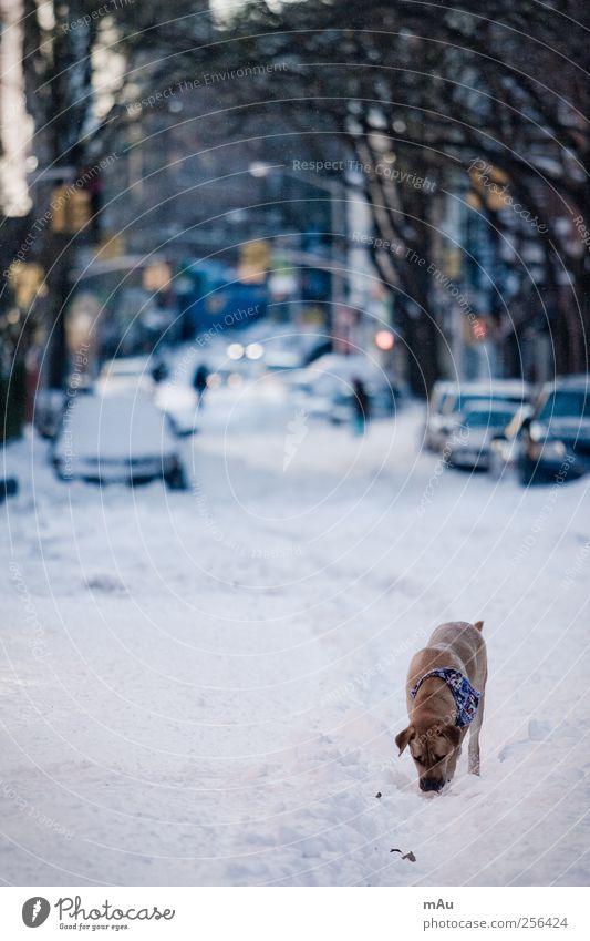 Vorweihnachtlich Hund Stadt weiß ruhig Tier Winter Straße Traurigkeit Schnee PKW Suche Gelassenheit Appetit & Hunger Leidenschaft Haustier Fahrzeug