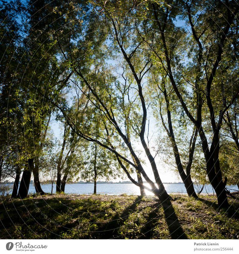 I can see the trees are dancing Himmel Natur Pflanze Sonne Umwelt Landschaft Luft Stimmung Urelemente