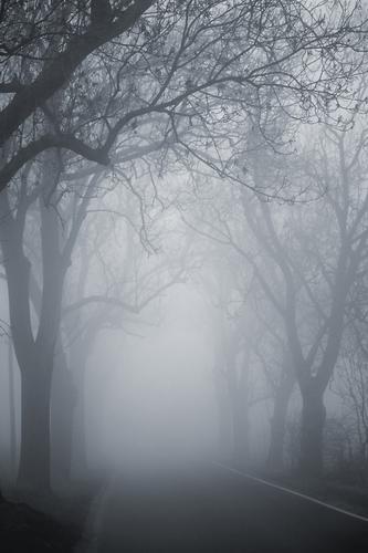 Zum Ende der Welt Baum Winter Herbst Straße Landschaft grau Wege & Pfade Wetter Angst Nebel bedrohlich Ast Risiko Autofahren mystisch Allee