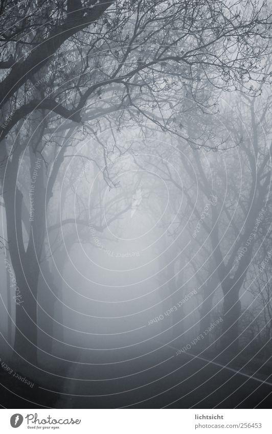 Zum Ende der Welt Landschaft Herbst Winter Wetter schlechtes Wetter Nebel Baum Straßenverkehr Autofahren Wege & Pfade grau unheimlich Landstraße Allee Nebelwald