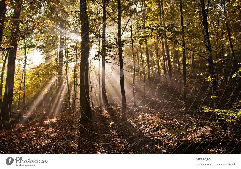 Natur schön Baum Sonne Blatt Wald Umwelt Landschaft Herbst hell Nebel Schönes Wetter Naturphänomene Blendeneffekt