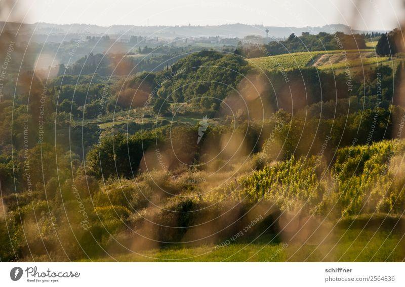 Streifzug durch die Toskana I Umwelt Natur Landschaft Pflanze Sommer Schönes Wetter Baum Gras Sträucher Wiese Feld Wald Hügel Wärme braun gold grün Italien