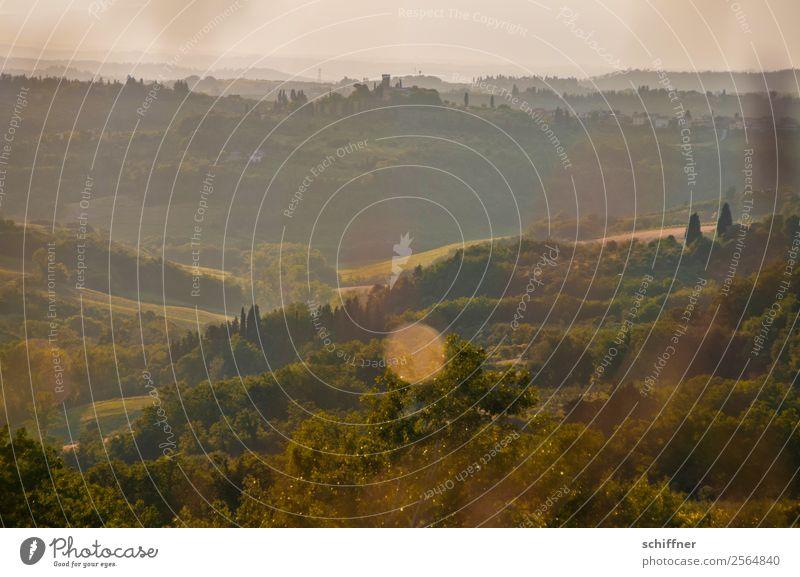 Streifzug durch die Toskana II Umwelt Natur Landschaft Pflanze Sommer Schönes Wetter Baum Gras Sträucher Wiese Feld Wald Wärme braun gold grün Italien Zypresse