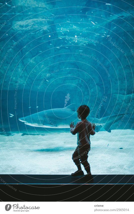 aufgeregter Junge beobachtet einen Hai im Zoo Freude Glück schön Leben Ferien & Urlaub & Reisen Ausflug Meer Kind Schule Mensch Familie & Verwandtschaft Natur