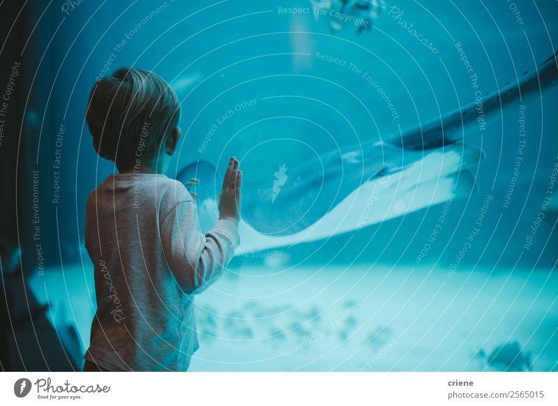 kleiner Junge, der auf große Fische im Ozeanarium starrt. Ferien & Urlaub & Reisen Meer Kind Mensch Kindheit Zoo Natur Wasser Erde Park Aquarium beobachten