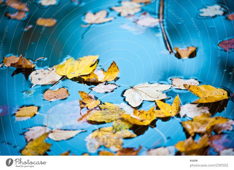 Buntes Treiben Natur Wasser Blatt gelb Herbst Umwelt Landschaft See Wetter gold glänzend Urelemente Vergänglichkeit Schönes Wetter Jahreszeiten Herbstlaub