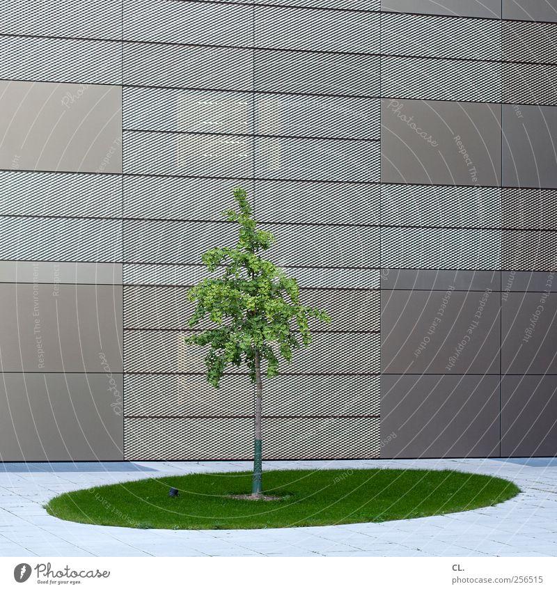natur pur Natur Baum Gras Blatt Stadt Hochhaus Bankgebäude Industrieanlage Platz Gebäude Architektur Mauer Wand Fassade einfach grün Ordnungsliebe Reinlichkeit