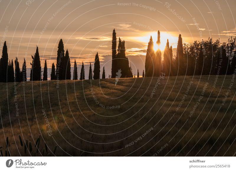 Toskanische Zahnreihe III Natur Sommer Pflanze Landschaft rot Sonne Baum schwarz gelb Wiese orange Feld Schönes Wetter Italien Reihe Toskana