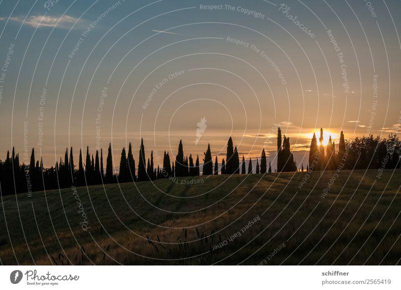 Toskanische Zahnreihe IV Natur Landschaft Pflanze Sonne Sonnenaufgang Sonnenuntergang Sommer Schönes Wetter Baum Wiese Feld gelb orange rot schwarz Reihe