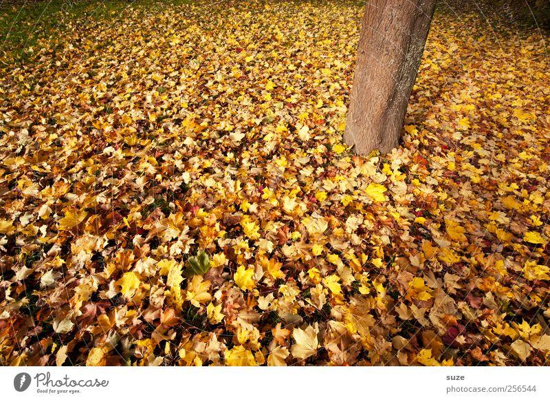 Holzfuß Umwelt Natur Pflanze Herbst Klima Wetter Schönes Wetter Baum Baumstamm authentisch herbstlich Herbstlaub Herbstfärbung Herbstbeginn Herbstwetter
