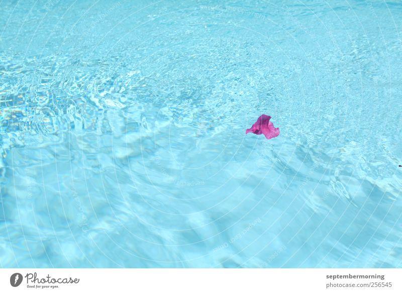 Blüte im Wasser Sommer Schönes Wetter saftig Sauberkeit blau violett Einsamkeit Farbfoto Außenaufnahme Menschenleer Tag Schwimmbad