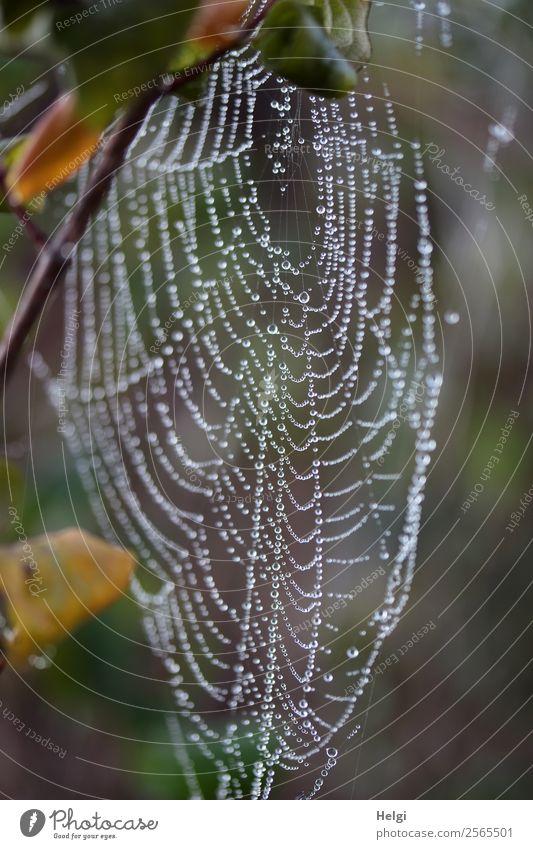 vorübergehend | verlassen ... Umwelt Natur Wassertropfen Herbst Nebel Pflanze Blatt Zweig Park Spinnennetz glänzend hängen warten ästhetisch authentisch