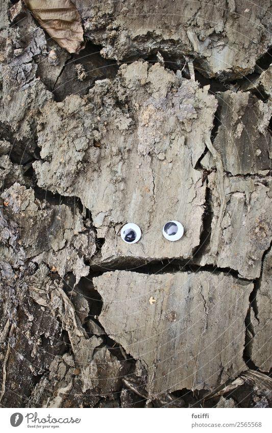 WackelbrokKoli / Wackel 2 Erde Seeufer einzigartig Riss Lehm Wackelaugen Auge verspielt Brokkoli braun vertrocknet Fragen trocken aufgesprungen Außenaufnahme
