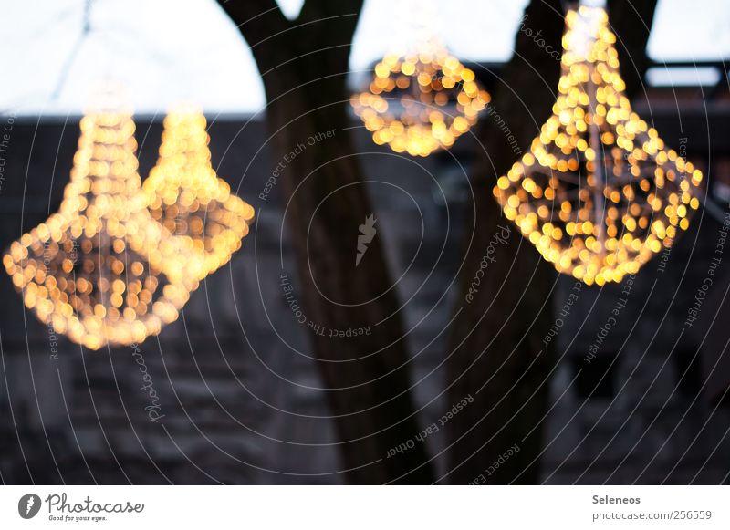Erst eins, dann zwei, dann drei, dann vier... Feste & Feiern Weihnachten & Advent Natur Baum Haus Mauer Wand Dekoration & Verzierung Lichterkette Stein Beton