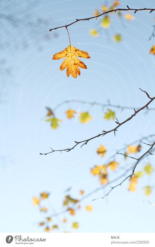 Sieben-Ender Himmel Natur blau Pflanze ruhig Blatt gelb Umwelt Herbst Luft Sträucher Dekoration & Verzierung Schönes Wetter Vergänglichkeit Wandel & Veränderung