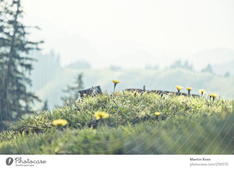 Von den blauen Bergen Natur Pflanze schön Baum Blume Landschaft Berge u. Gebirge gelb Wiese Gras klein hell frisch Fröhlichkeit Blühend niedlich