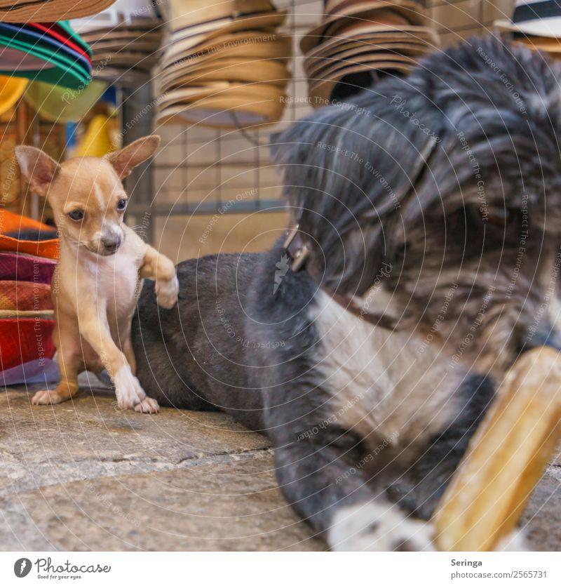 Ich will doch nur spielen Tier Haustier Hund 2 Fressen Spielen Hundeblick Hundeschnauze Hundespielzeug Farbfoto Gedeckte Farben mehrfarbig Außenaufnahme