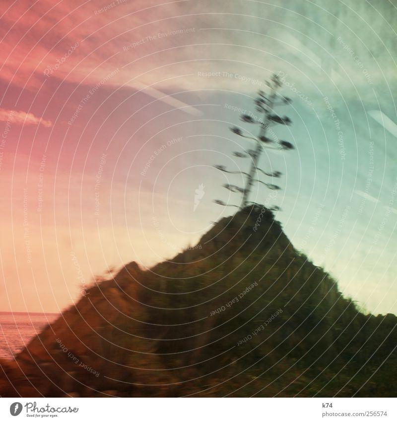 Blütenstand Natur Landschaft Himmel Sommer Pflanze Kaktus Hügel fahren grün rosa Farbfoto Gedeckte Farben Außenaufnahme Menschenleer Textfreiraum oben Tag Licht