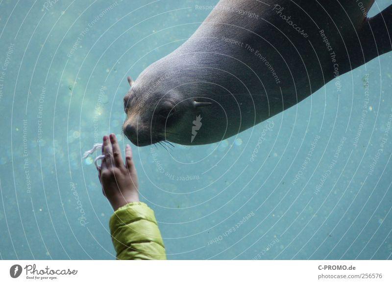 Tierische Begegnung Mensch Kind Wasser Hand Tier Wildtier Zoo Interesse Aquarium begegnen Robben Unterwasseraquarium Kegelrobbe