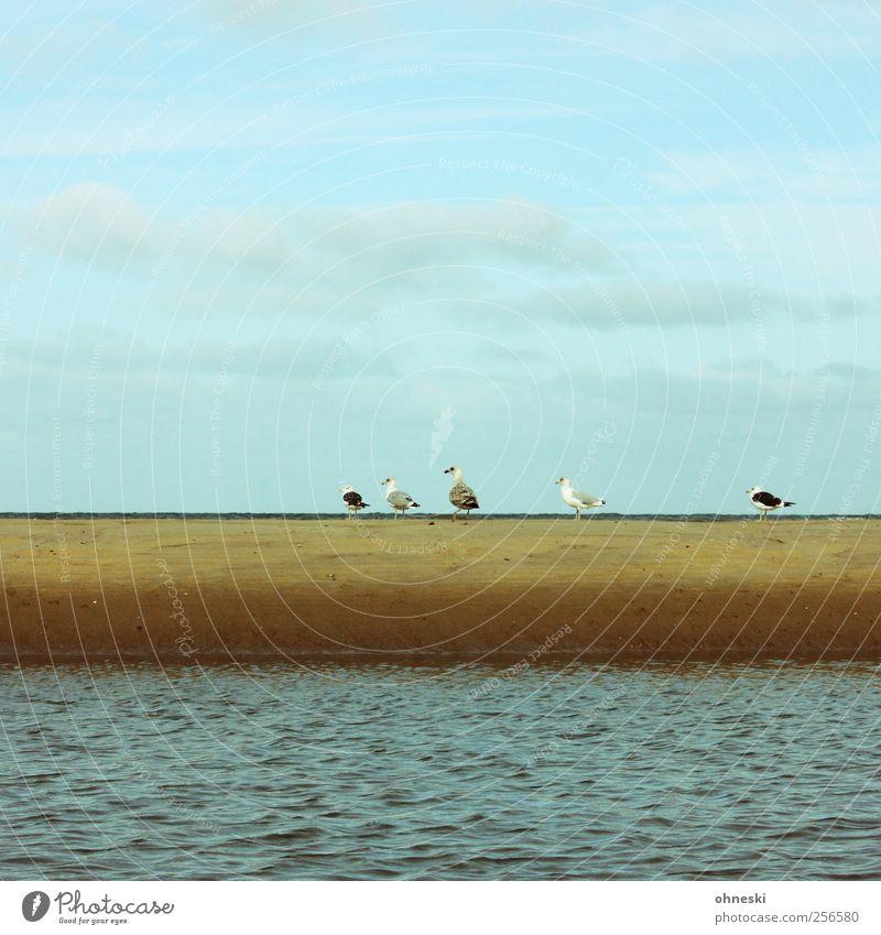 Alle mir nach! Himmel Wellen Küste Strand Nordsee Meer Tier Vogel Möwe Tiergruppe gehen Reihe Farbfoto Außenaufnahme Textfreiraum oben Textfreiraum unten Tag